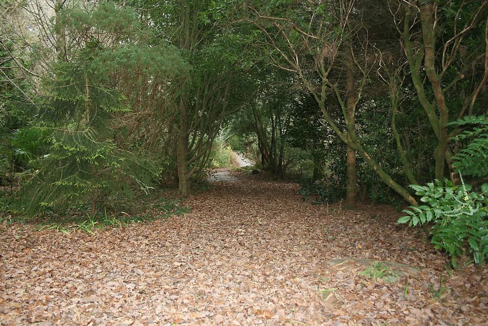Muckross House grounds in Autumn by John Quinn