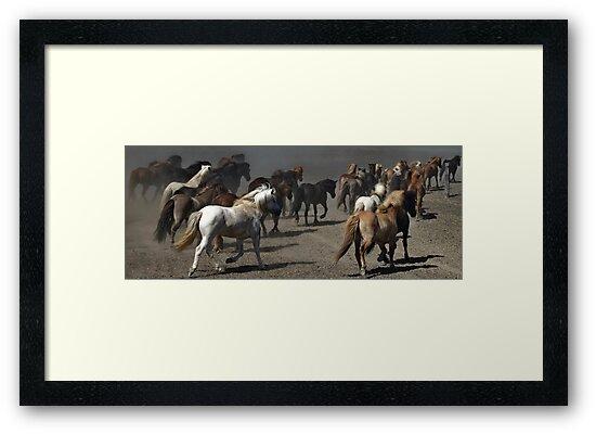 Icelandic Horses by Philippe Rikir