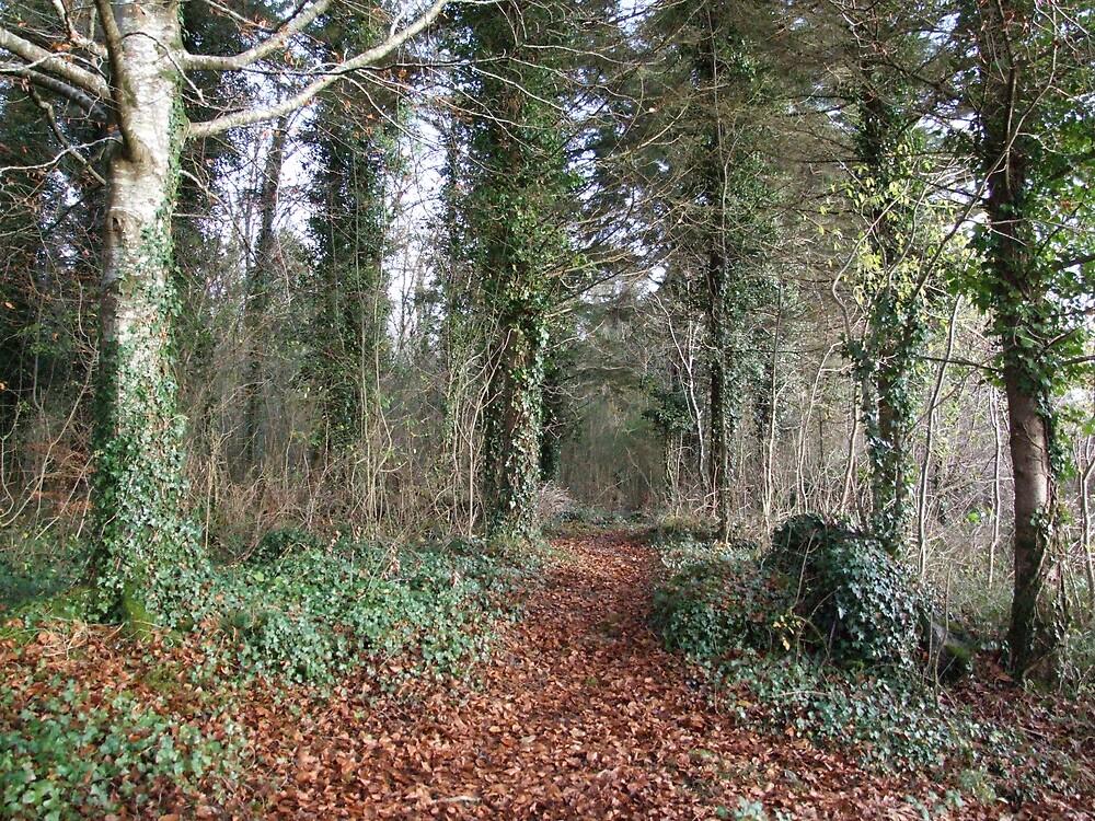 Dromore wood in Autumn by John Quinn
