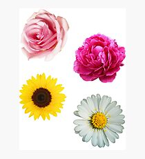 Flowers Set Photographic Print