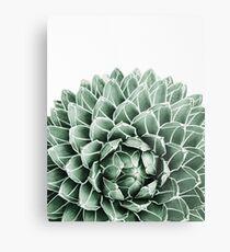 Succulent splendour Metal Print