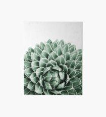 Succulent splendour Art Board