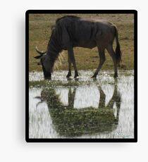 Wildebeest in the Mirror Canvas Print