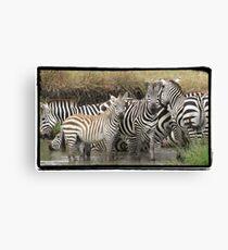 Zebra Bath Canvas Print