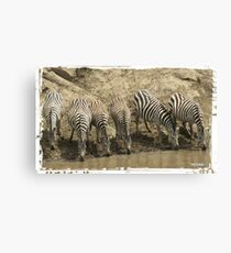 Zebras at the River Canvas Print