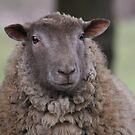 Sheepish Smile by Pamela Jayne Smith
