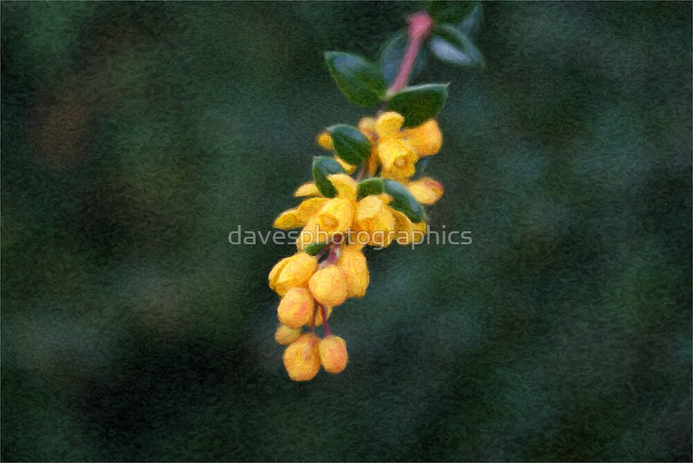 Painted Yellow Buds by davesphotographics