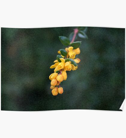 Painted Yellow Buds Poster