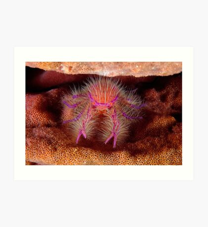 Hairy Squat Lobster Art Print