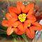 *Orange 3 together - Enchanted Flowers*