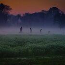 Morning caring. by Sagar Lahiri