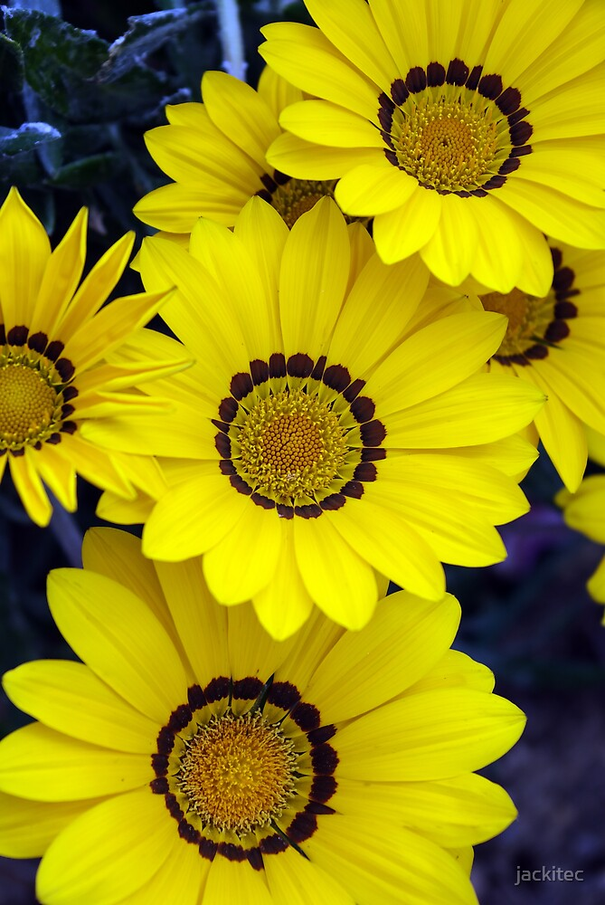 Yellow Bunch by jackitec