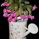 Watering Can full of Cacti by AnnDixon