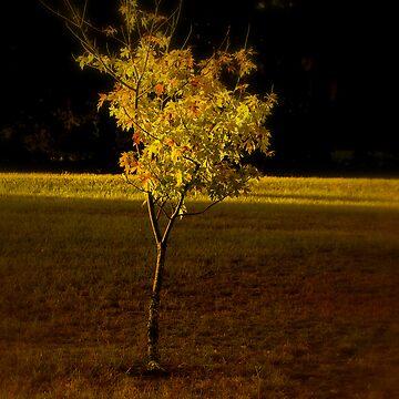Autumn Sapling by sherryk