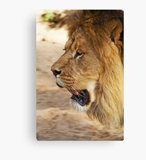 King of the wilderness Canvas Print