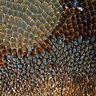 Seeds of the Sunflower by Pamela Jayne Smith