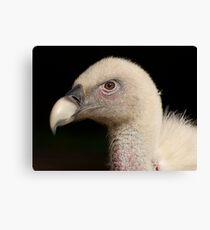 Head of a vulture Canvas Print