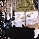 My Favorite Buck!! by mwmclaren