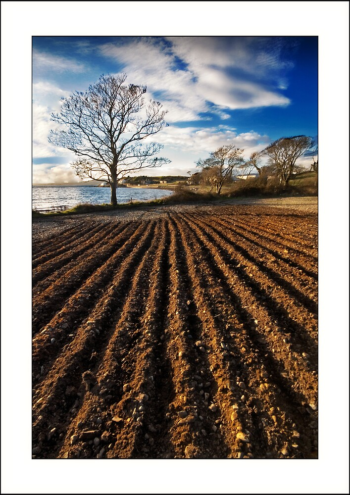 Ploughed field on Strangford shores by jimfrombangor