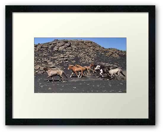 Icelandic horses in the wind by Philippe Rikir