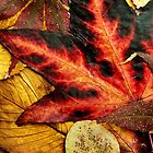 Autumn Rust 2017 by VanOostrum
