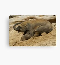Baby elephant having fun Canvas Print