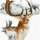 Fallow Deer by BarbBarcikKeith