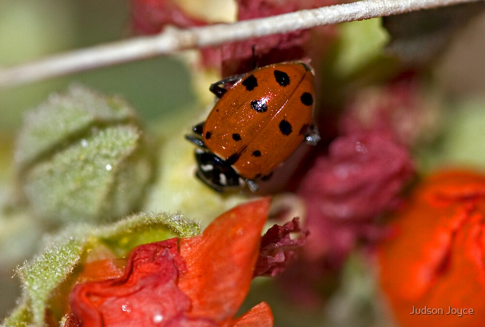 Lady Bug by Judson Joyce