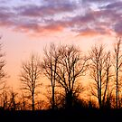 New York Trees by markophoto