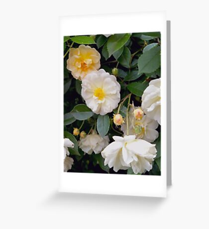 Rose So Lovely Greeting Card