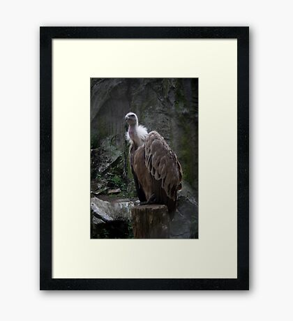 Vulture King, lost in time...  Framed Print