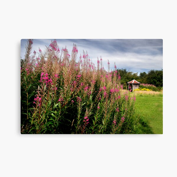 Summer WAS here - Old Winchester Hill, Hampshire Canvas Print