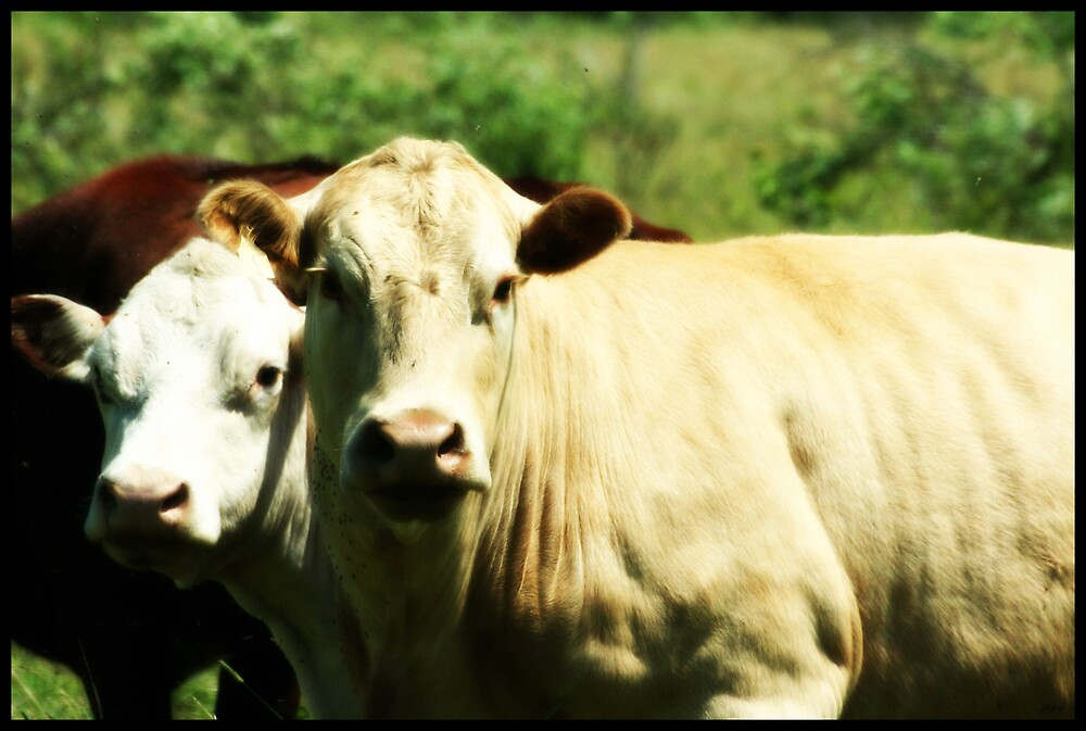 Cows In A Feild by Emily Davison