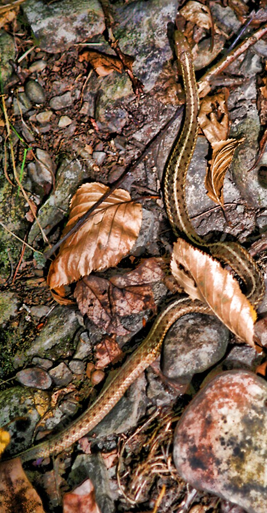 The Snake by GPMPhotography