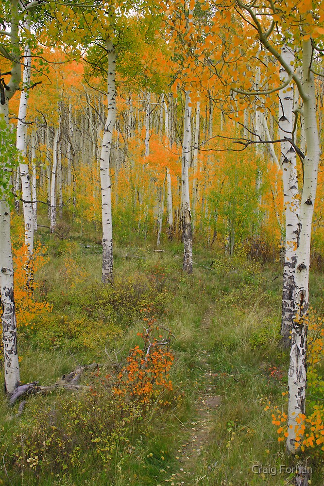 Fall in Silverthorne by Craig Forhan