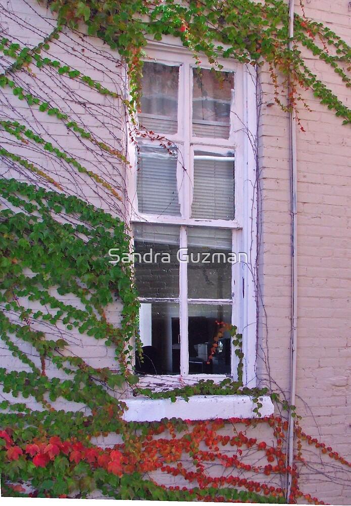 Autumn Window by Sandra Guzman