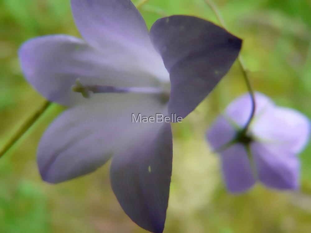 Blue Bells by MaeBelle