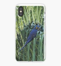 Hyacinth Macaw in the wild iPhone Case