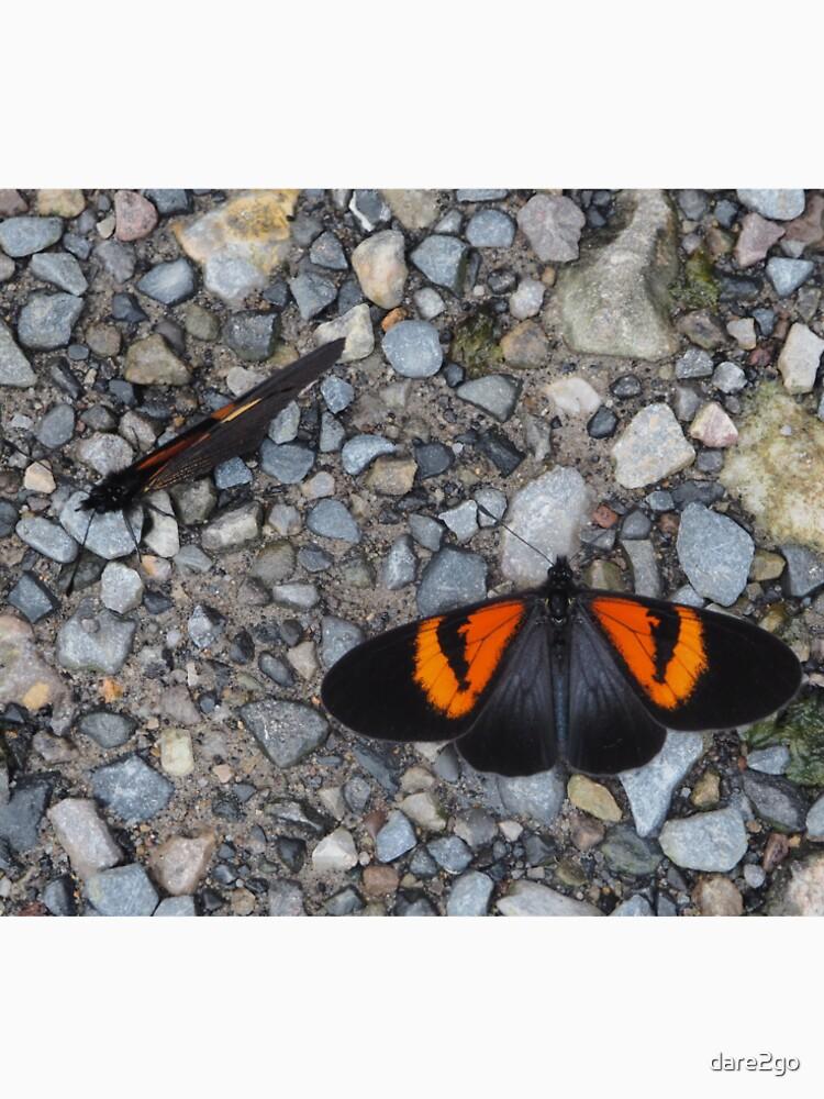 Two black and orange butterflies von dare2go