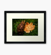 Maple and Douglas Fir Framed Print