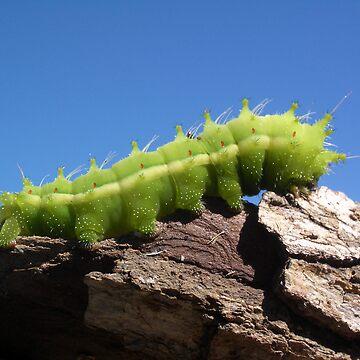 Green Caterpillar by PeterSam