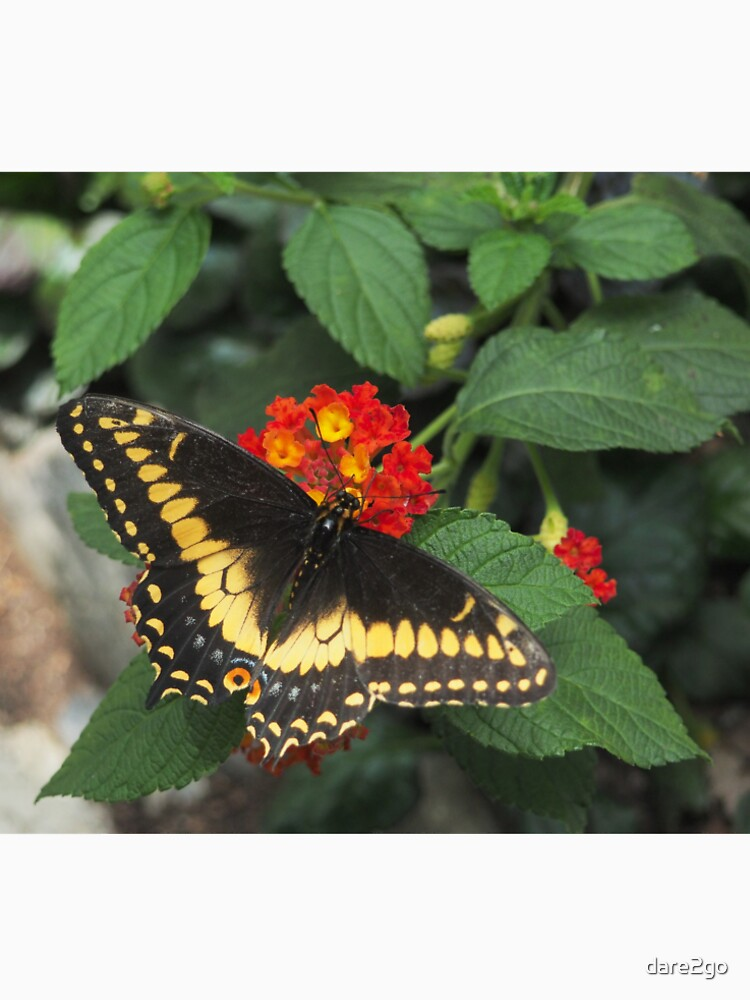 Beautiful yellow butterfly on Lantana flowers von dare2go
