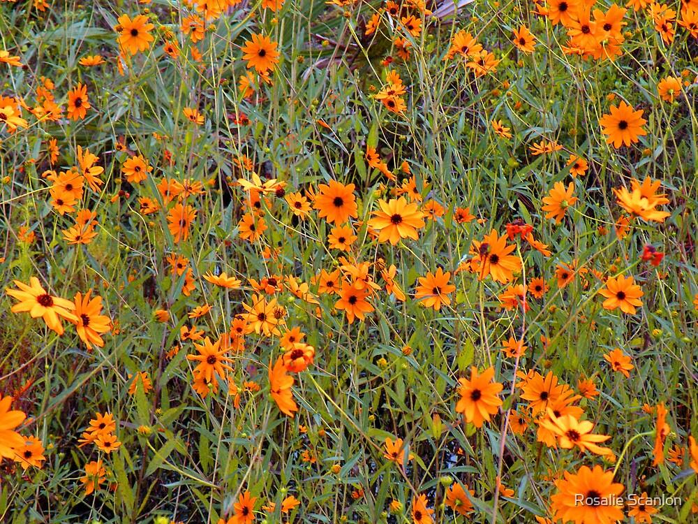 Wild Sunflowers painted orange by Rosalie Scanlon