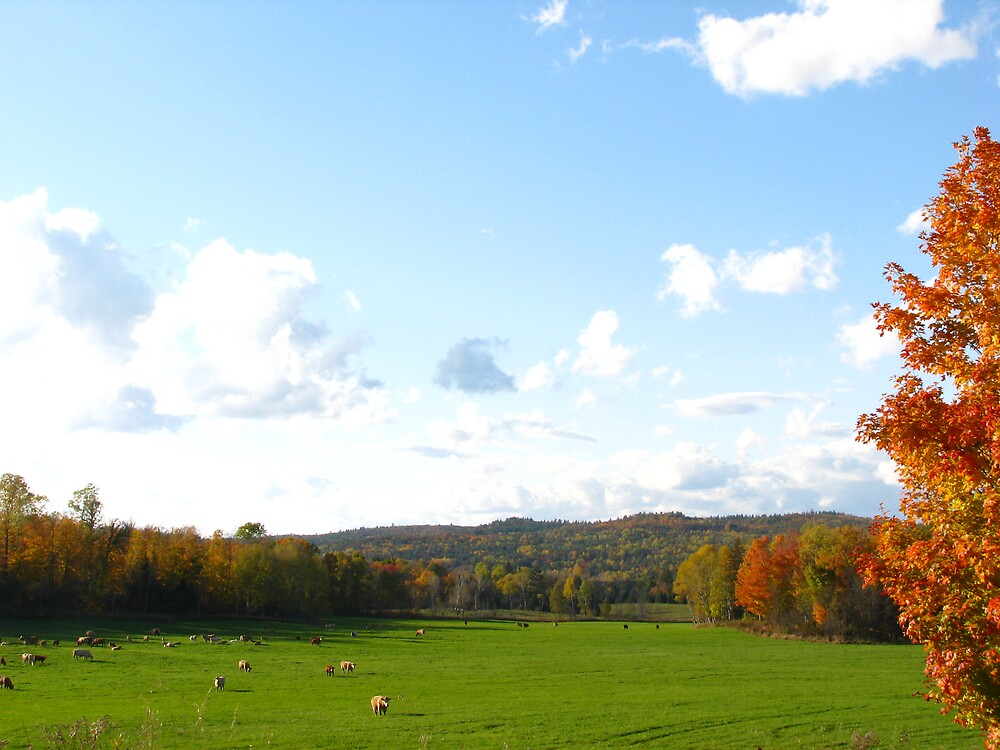 Fall Pasture by JohnEvans