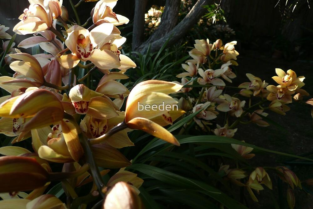 Orchid Spray 3 by beeden
