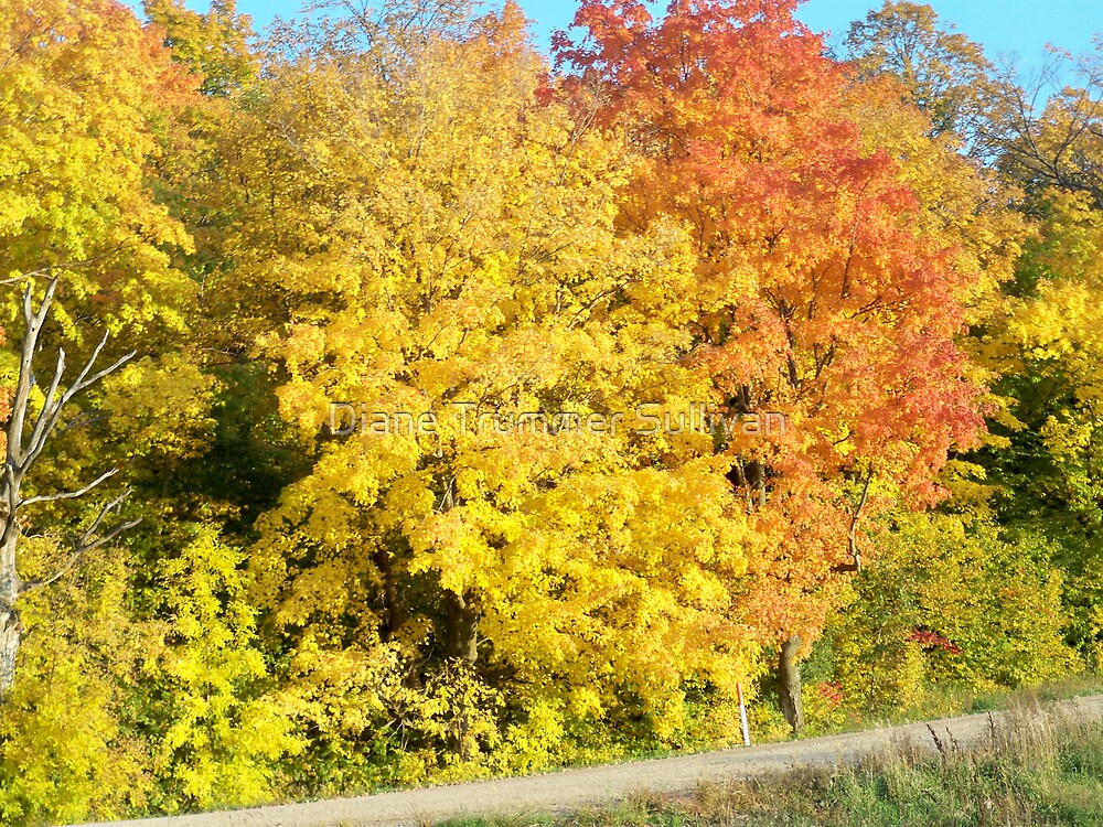 October FALL Afternoon Minnesota by Diane Trummer Sullivan