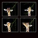 Baby Giraffe Composite by Lisa G. Putman