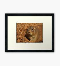 Prairie Dog .... Framed Print