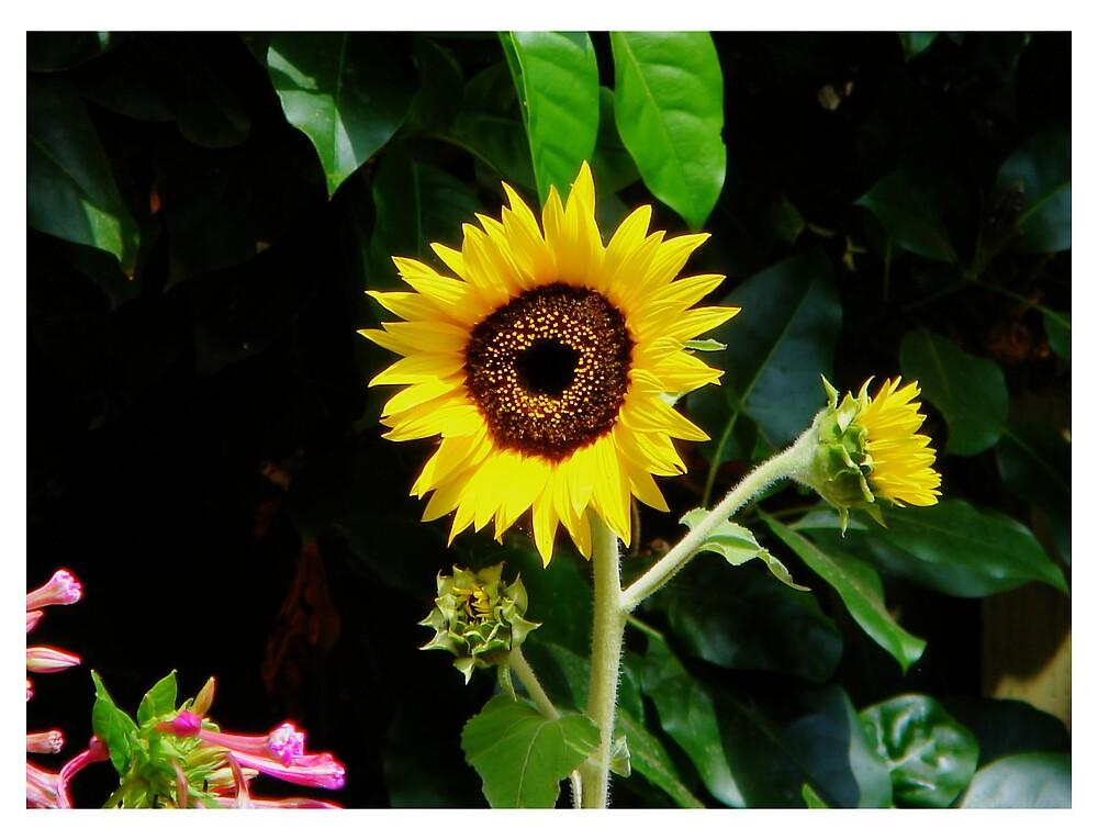 Sunny by sanimexicani