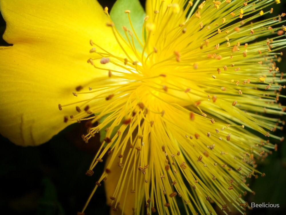 Yellow Flower Firework by Beelicious